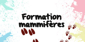 Formation mammifères